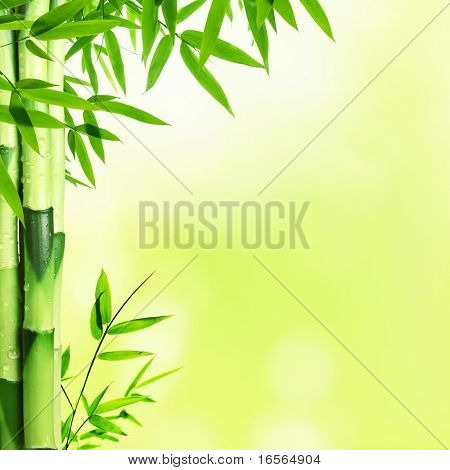 Bright Bamboo background with copy space
