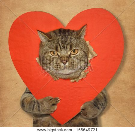 The big cat shows his paw the sign of off against the background of a big red heart. Beige background.