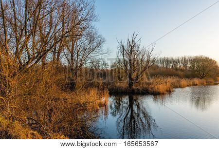 Banks of a creek in a Dutch nature reserve in the late afternoon of a sunny and almost windless day in the winter season.