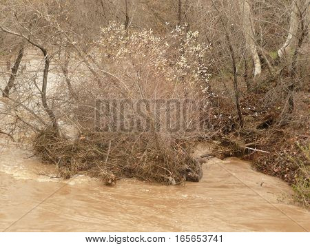 Guadalupe River after a heavy rainstorm with trees and shrubs partiailly submerged