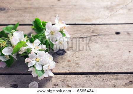 Tender apple tree flowers on aged vintage wooden background. Selective focus. Place for text. Still life photo.