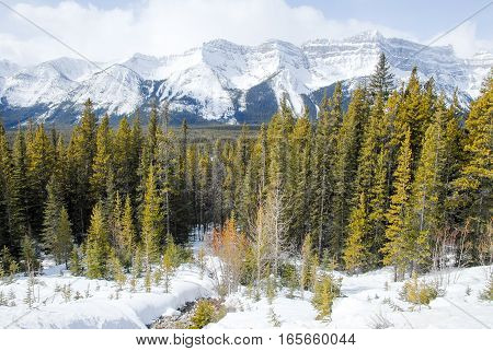 Mountain Range of Canadian Rockies in Winter Alberta Canada