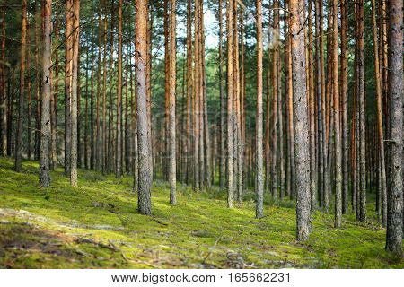 Mixed Pine And Deciduous Forest