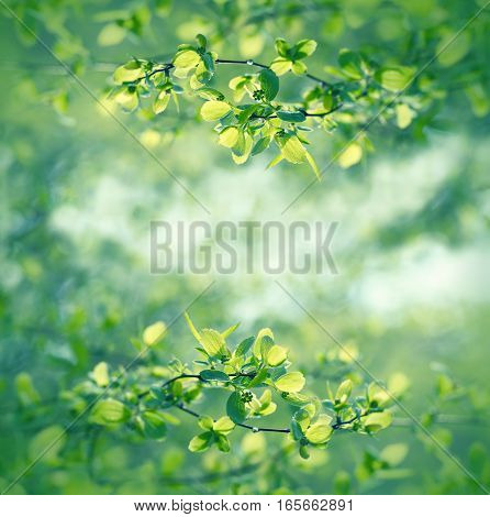 Selective focus on spring leaves - beautiful spring in forest