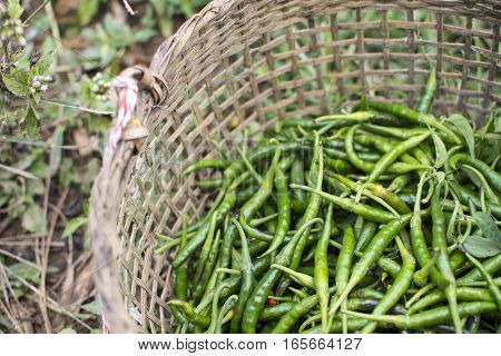 Closeup of some Green Chillies mixed in the basket.