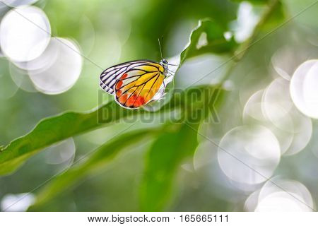 Butterflies perch on leaf green and bokeh background