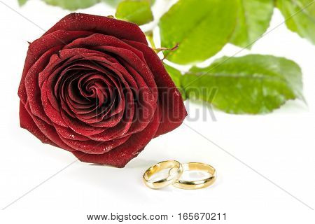 Beautiful blooming red rose and two gold wedding rings on a white background