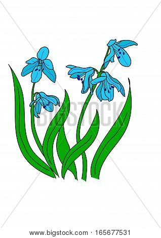 The turquoise snowdrop on a white background.