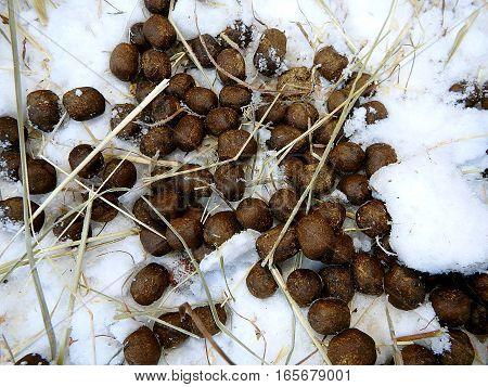 droppings of deer in winter , pellet ,