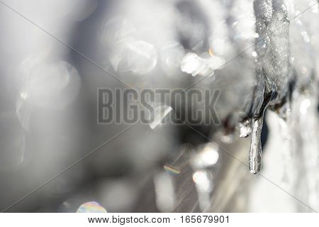 Beautiful icicles from leaves in natural light
