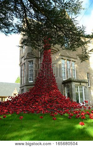 A view of a poppies exhibition in Perth