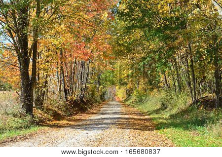 Leaves covering a Country road on an Autumn day