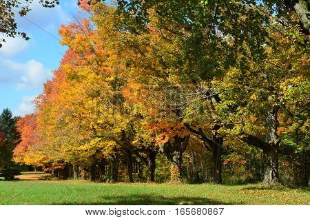 Row of colorful trees in the country on an Autumn day