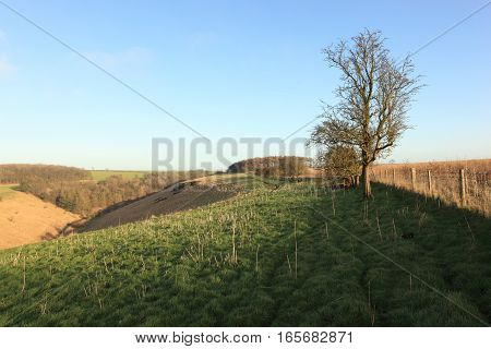 English landscape in winter with hillside meadows, woodlands and a hawthorn tree under a clear blue sky