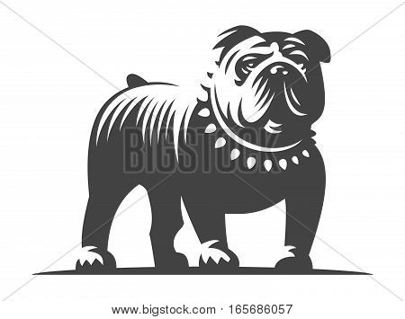 Bulldog vector illustration, design on white background