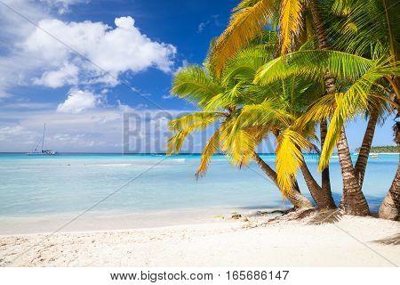 Coconut Palms Grow On Sandy Beach