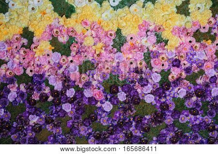 texture on a flowerbed of colorful flowers in the Park.