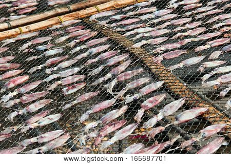 Squid Drying In Thailand
