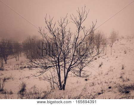 lonely tree on a foggy day in winter, retro