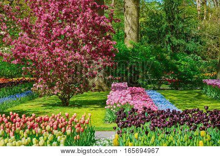 Garden At Spring