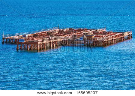 Image of Mussel Farm in the Black Sea
