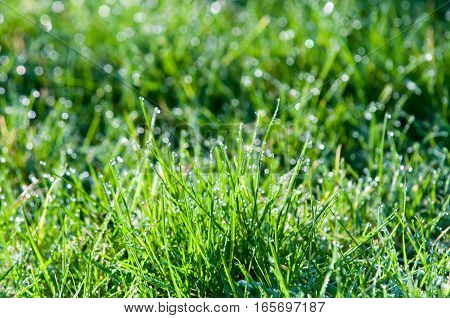 Water Droplets On Grass, Green Grass With Light Bokeh From Rain Drops