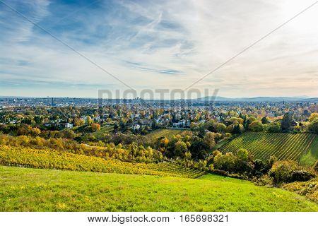 Vineyard in Autumn in Front of the Skyline of Vienna in Austria