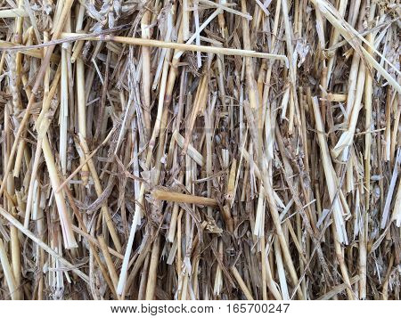 A close look at a haystack, but where is the needle?