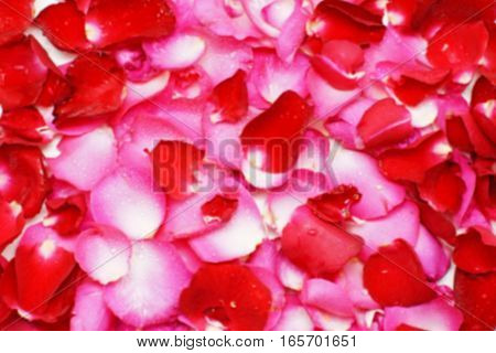 Blurry Rose Petal Picture