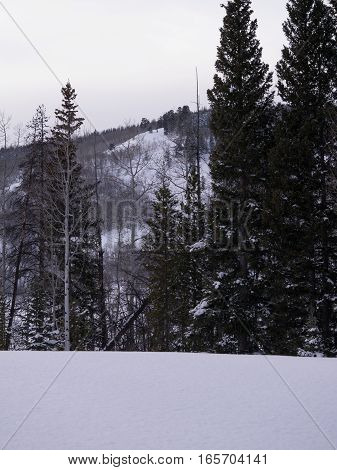 Aspen and pine forest in mountains, covered with snow