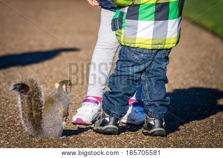 Hungry squirrel in Regents Park in London waitintg for peanuts thrown by kids