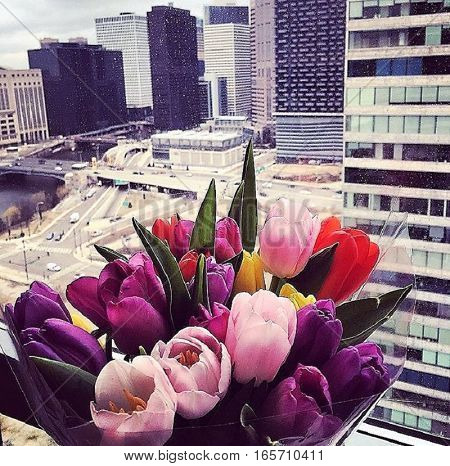 Chicago, downtown, city, skyscrapers, big, prettiness, flowers, romance, nature