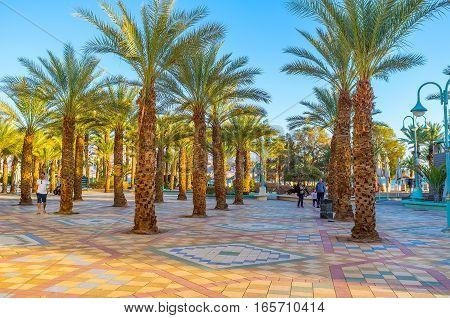 Walk Among The Palms