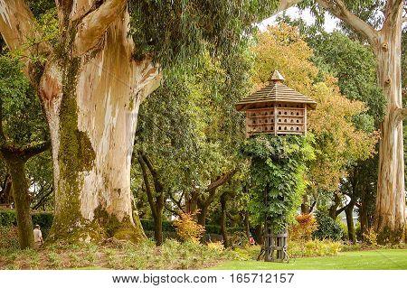 A gum tree and a pigeon house in the Mirador Parque da Alameda of Santiago de Compostela, Galicia, Spain