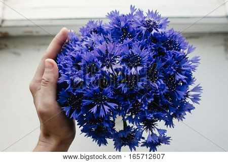 Beautiful Bunch Of Cornflowers In Hand On Wooden White Window Sill Background, Rustic Wallpaper, Spa