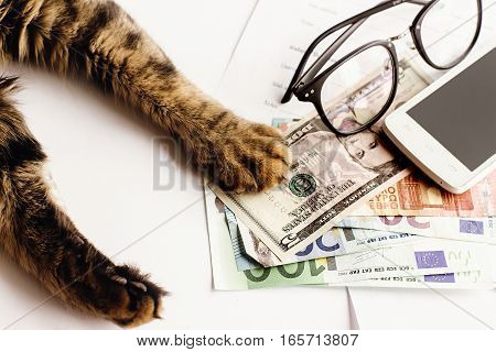 Cute Cat Sitting On Table With Glasses Phone And Holding Paw On Money, Working Home Or Shopping Onli