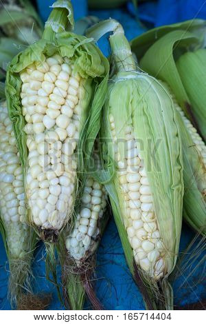 non genetically modified corn in Otavalo Ecuador produce market