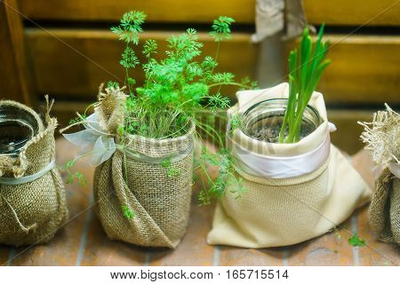 green onions and herbs in a beautiful jar. clouse up