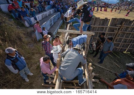 August 13 2016 Ibarra Ecuador: men preparing a bull at the rodeo ring entrance at a local event