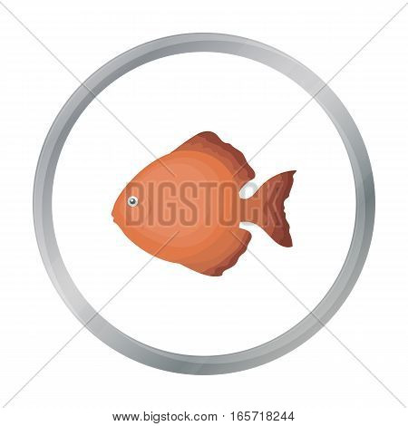 Discus fish icon cartoon. Singe aquarium fish icon from the sea, ocean life cartoon.