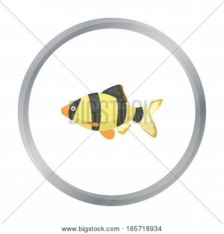 Barbus fish icon cartoon. Singe aquarium fish icon from the sea, ocean life cartoon stock vector