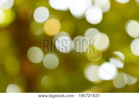 Glittering bokeh circular white on green background .