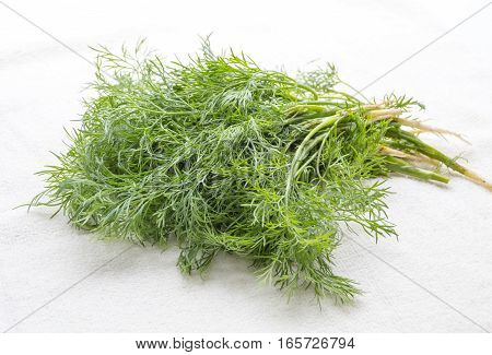 Fresh green dill in drops of water