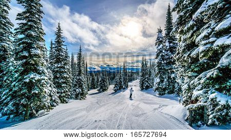 Skiing under Sunset in a Winter Landscape in the High Alpine on the Ski Hills of Sun Peaks in the Shuswap Highlands of central British Columbia, Canada