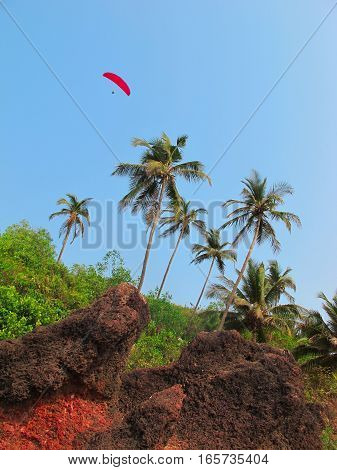 Red paraglider flies over the palm trees on the ocean beach