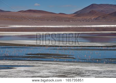 Flamingos at Red Laguna Colorada in Altiplano Bolivia South America