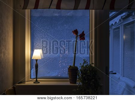 An Advent flower, Christmas lights in a window. Snowy windows, curtains and door. Forest and Christmas tree outdoors.
