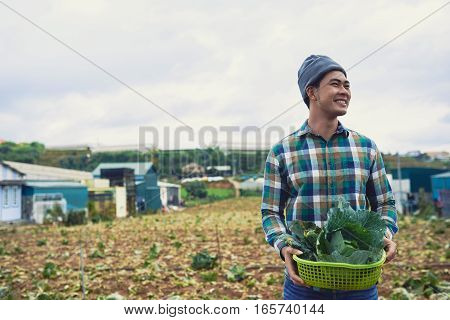 Vietnamese smiling young man harvesting cabbage field