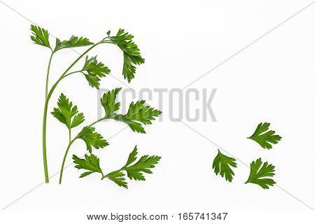 closeup of fresh parsley stalks isolated on white background