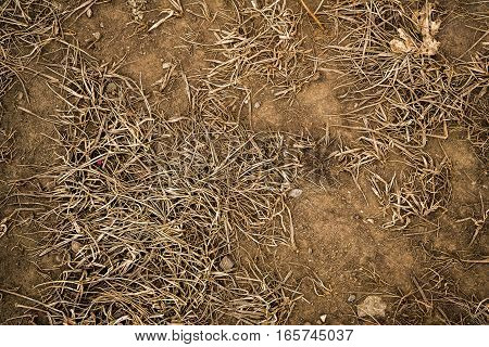 Grass, dry grass and ground, soil, autumn or spring background